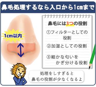 鼻毛には3つの役割があるので、鼻の入口から1㎝以内の処理にしてください。